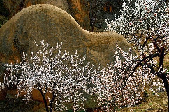 Kapadokyada bahar güzelliği büyülüyor  2