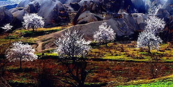 Kapadokyada bahar güzelliği büyülüyor  4