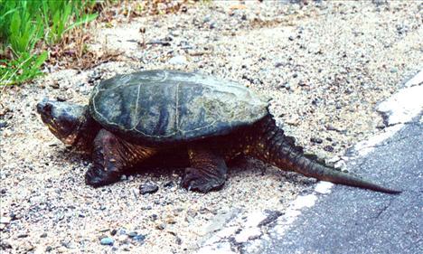 Dünyanın egzotik kaplumbağaları  2