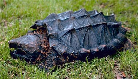 Dünyanın egzotik kaplumbağaları  3