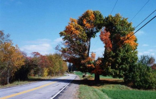 Şaşırtan Ağaçlar  1