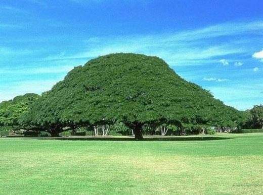 Şaşırtan Ağaçlar  4