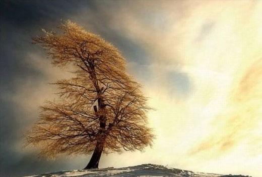 Şaşırtan Ağaçlar  5