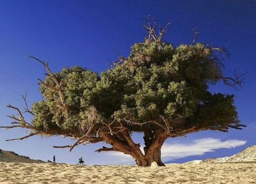 Şaşırtan Ağaçlar  6