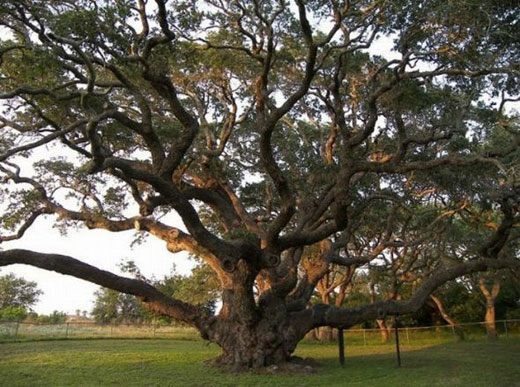 Şaşırtan Ağaçlar  8