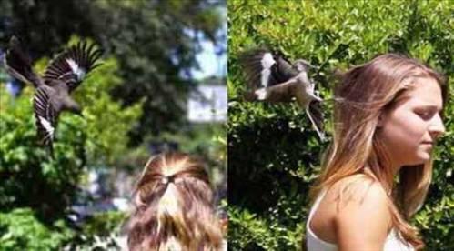 Hayvanların Çıldırdığı Anlar 17