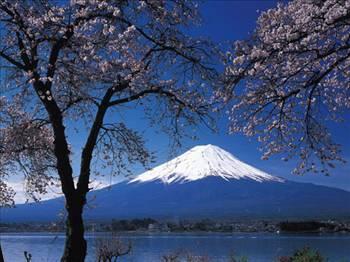 İntihar Ormanı: Aokigahara 1