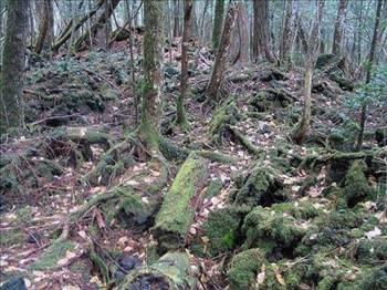 İntihar Ormanı: Aokigahara 10
