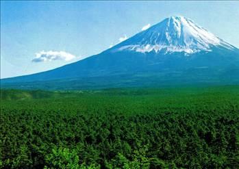 İntihar Ormanı: Aokigahara 4