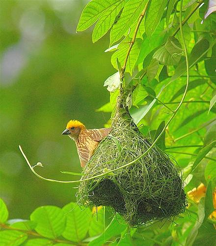 Mimar Kuşların Sanat Harikaları 1