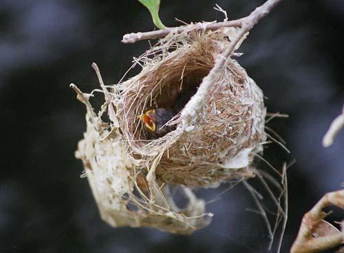 Mimar Kuşların Sanat Harikaları 13