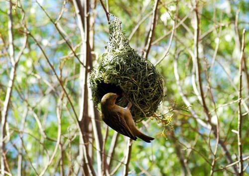 Mimar Kuşların Sanat Harikaları 15