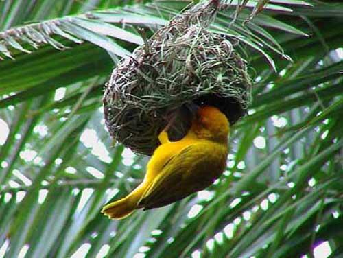 Mimar Kuşların Sanat Harikaları 4