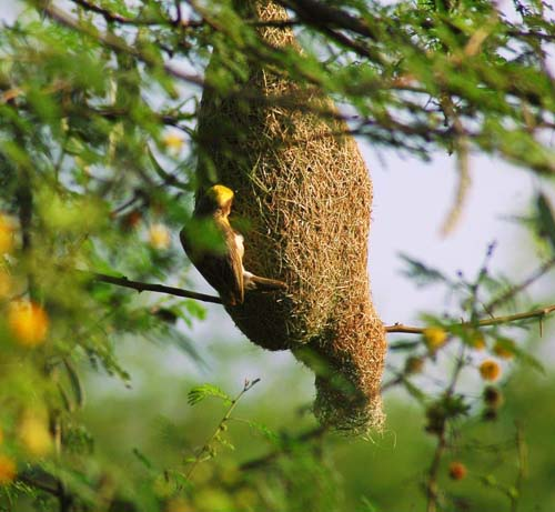 Mimar Kuşların Sanat Harikaları 8