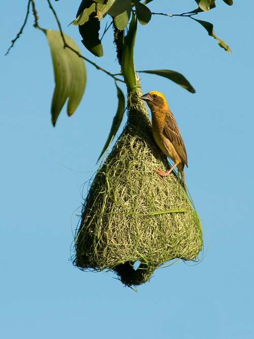 Mimar Kuşların Sanat Harikaları 9