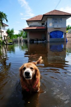 Taylandda yüzyılın en büyük doğa felaketi 15