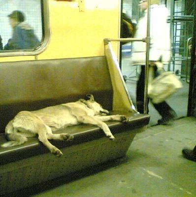 Dünya Metrolarından Güldüren Kareler 4