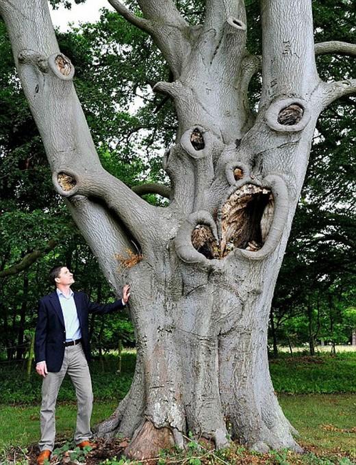 Canavar Gibi Ağaçlar 11