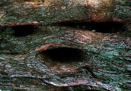 Canavar Gibi Ağaçlar 12