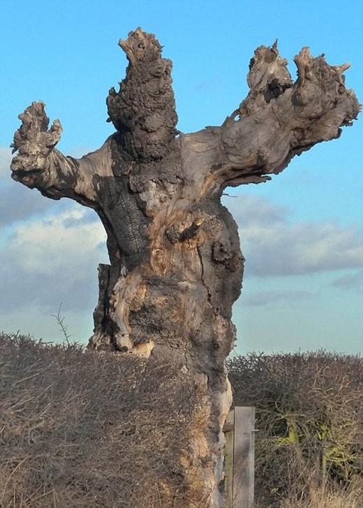 Canavar Gibi Ağaçlar 13