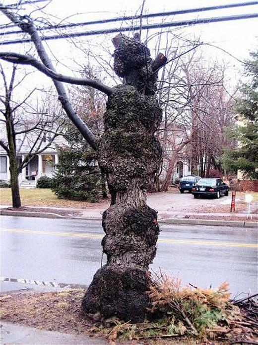 Canavar Gibi Ağaçlar 16