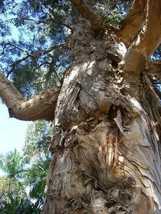 Canavar Gibi Ağaçlar 17