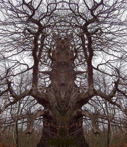 Canavar Gibi Ağaçlar 18
