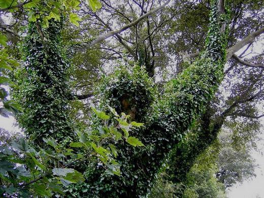 Canavar Gibi Ağaçlar 2
