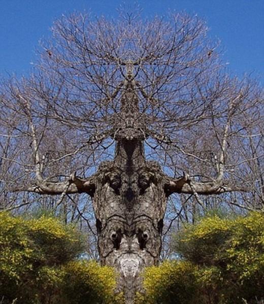 Canavar Gibi Ağaçlar