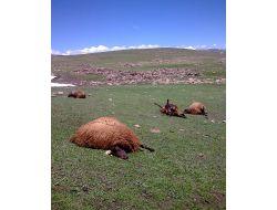 Erzurumda Koyun Sürüsüne Kaleşnikoflu Saldırı