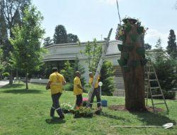150 Yıllık Kurumuş Ağaca Saksılı Makyaj