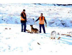 Mamak Belediyesi, Kış Nedeniyle Sokak Hayvanlarına Yiyecek Bırakıyor