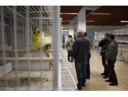 Türkiyenin En Güzel Kuşları Belirlendi