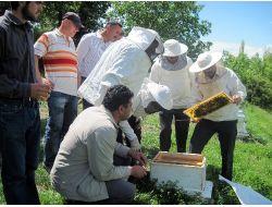 Amasya'da Çiftçilere Arıcılık Kursu Verildi