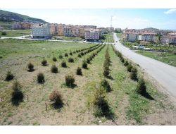 Altındağ'a Bir Ayda 5 Bin Ağaç