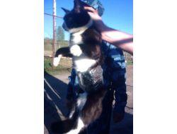 Rusyada Cezaevine 2 Cep Telefonu Sokmaya Çalışan Kedi Yakalandı