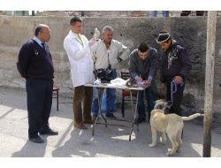Mamakta Evcil Hayvanlara Kuduz Aşısı Yapılıyor