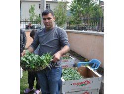 Beytüşşebap'ta Sebzecilik Projesine Yoğun İlgi