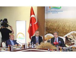 Buğdayın Taban Fiyatı Açıklandı: Tonu 720 Lira