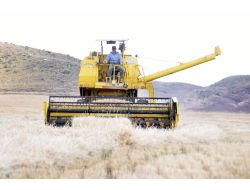Açıklanan Buğday Taban Fiyatı Yozgat Çiftçisini Tatmin Etmedi