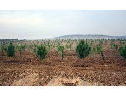 Eroğlundan İstanbula İki Yeni Orman Ve 5 Milyon Fidan Müjdesi
