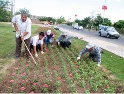 Elazığa 700 Bin Çiçek Dikildi