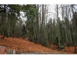 Afam: Meclisteki Orman Yasa Tasarısı Türkiye'nin Ekolojisini Bitirir (Özel)