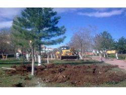 Chp'li Belediye İşyeri İçin Ağaçları Kesti