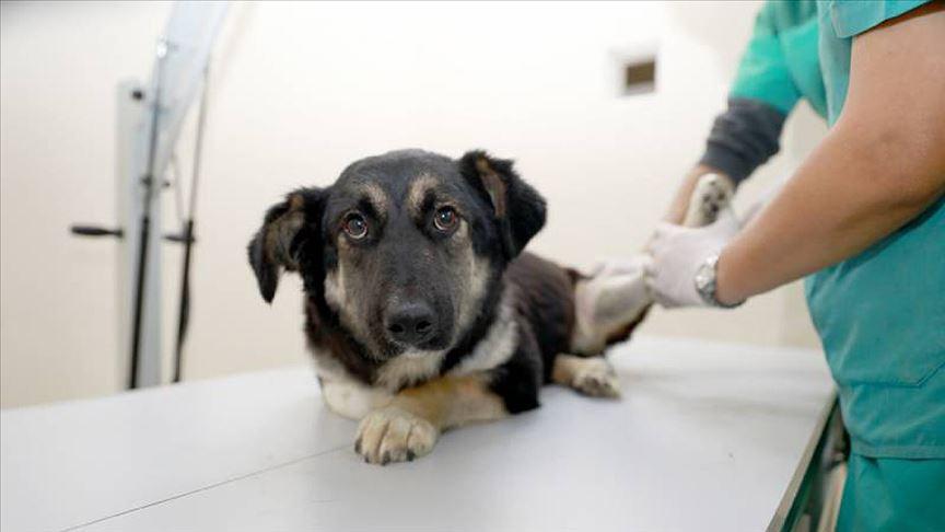Ankara'da hayvanlara müdahale için ilk yardım eğitimi verilecek!
