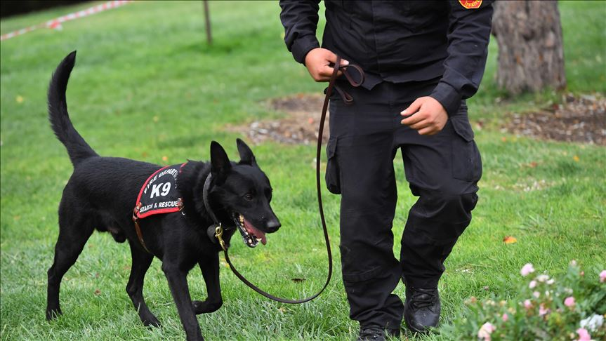 Başkent itfaiyesinin arama kurtarma köpekleri uluslararası göreve hazır