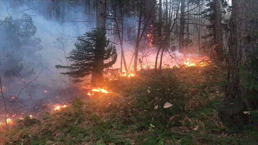 Uludağ'da orman yangını çıktı!