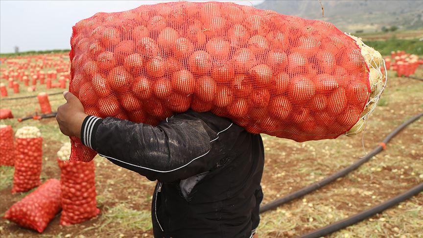 Tarım ve Orman Bakanlığı'ndan soğan-patates ihracatına ön izin açıklaması