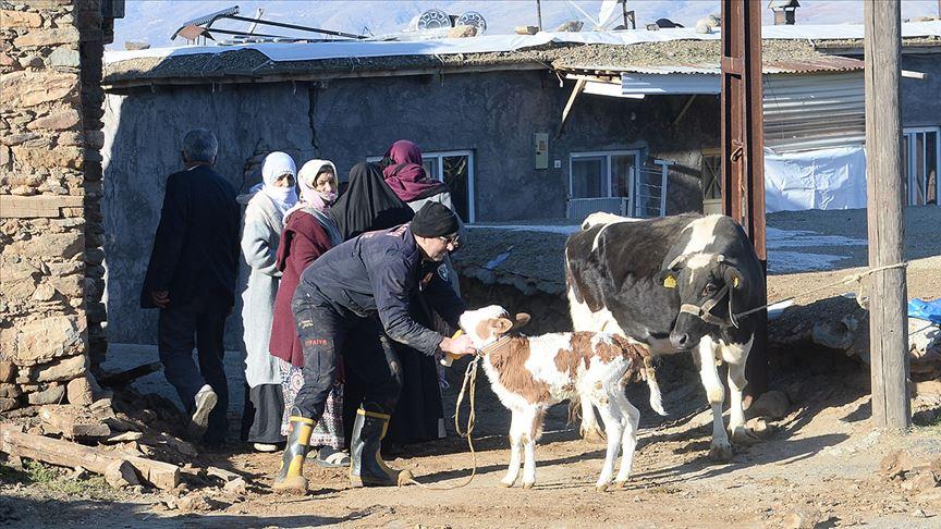 Malatya'da yıkılan ahırlarda mahsur kalan hayvanları itfaiye ekipleri kurtardı