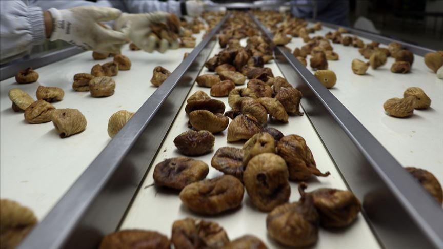 Türkiye'nin kuru meyve ihracatı 700 milyon doları aştı!